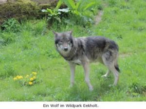 Wolf-Eekholt